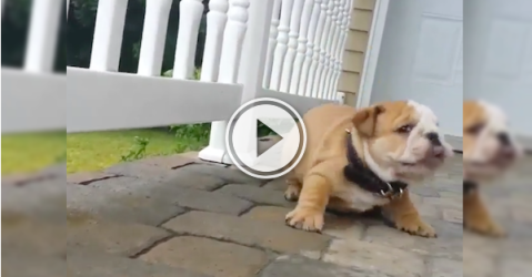 This little guy's not having any of this Monday morning (Video)