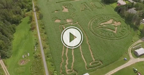 Now this is one hell of a bat-flippin' awesome corn maze! (Video)