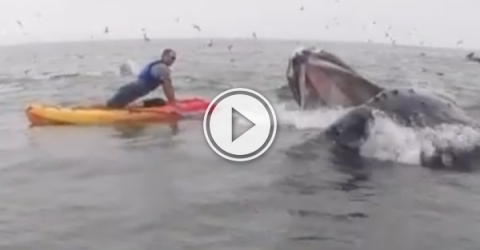 Massive whale joins vets push up challenge (Video)
