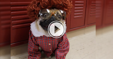 """Who wouldn't want to enter the Upside Down on """"Stranger Pugs?"""" (Video)"""