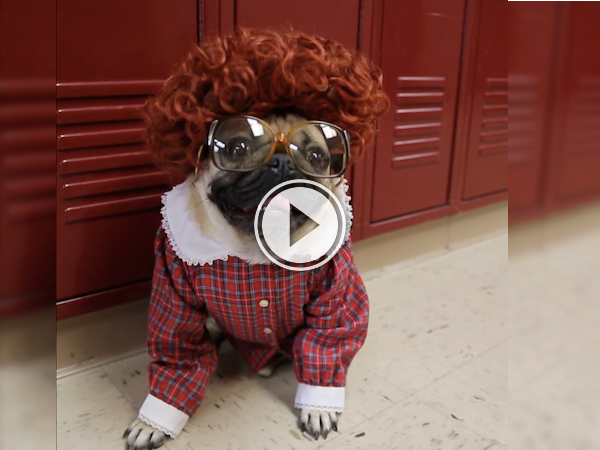"Who wouldn't want to enter the Upside Down on ""Stranger Pugs?"" (Video)"