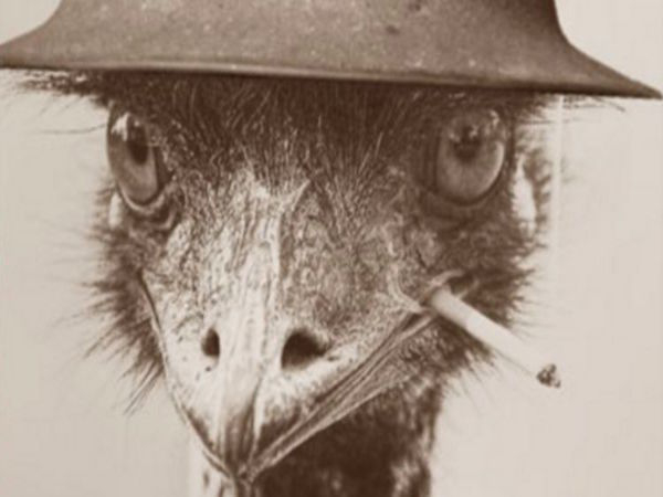 remember the time australia declared war on emus and lost x photos 26 Remember the time Australia declared war on Emus, and lost? (13 Photos)