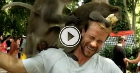 Two monkeys start humping on guys head