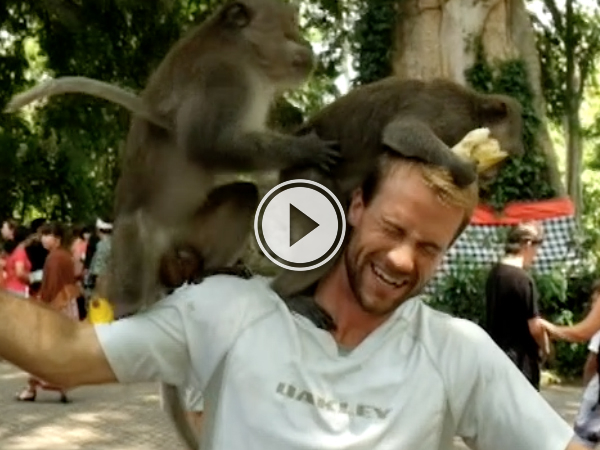 Two monkeys start humping on guys head
