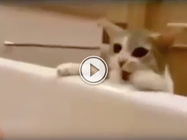 Cute kitty tries to save his buddy from drowning in the tub! (Video)