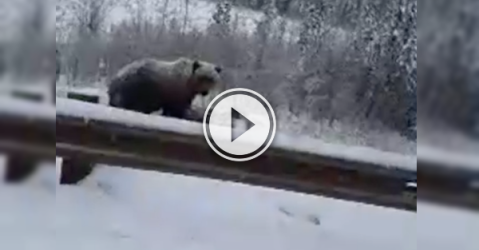 Oh the things you see, driving along in Canada (Video)