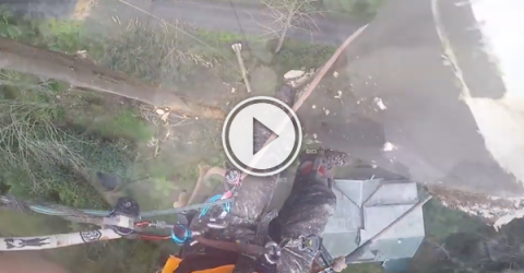 When you're a lumberjack, it helps if you don't look down! (Video)