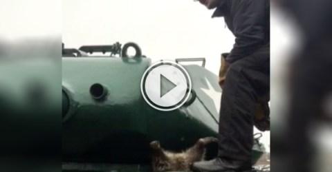 Raccoon gets stuck in tank