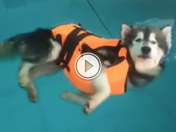 Dog takes swimming lessons, fails adorably