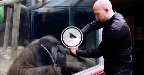 Magician performs mind blowing magic trick for Orangutan