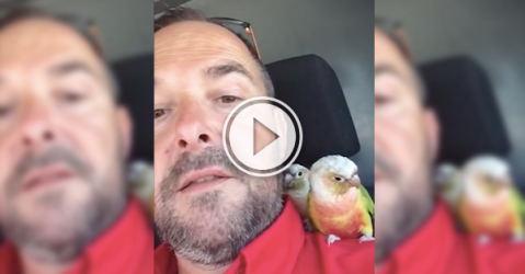 Two abandoned birds find a new home with a Toronto plumber (Video)