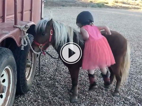 Adorable little girl climbing on to a pony (Video)