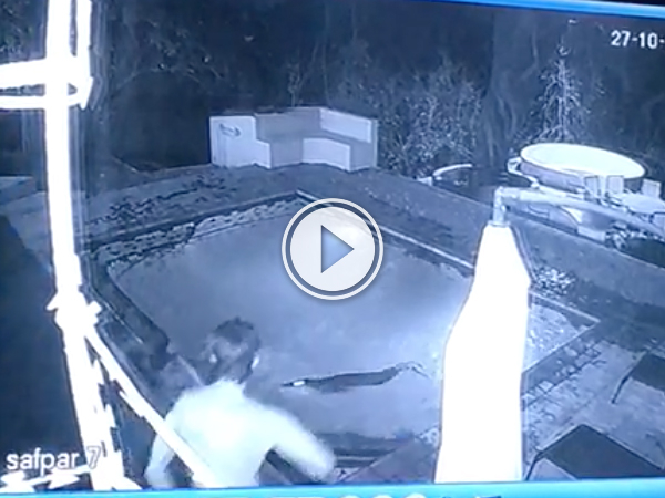 Couple in privite pool gets attack by crocodile (Video)