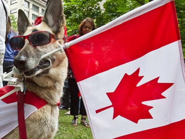 meanwhile in canada photos 225 Meanwhile, in Canada... (33 Photos)
