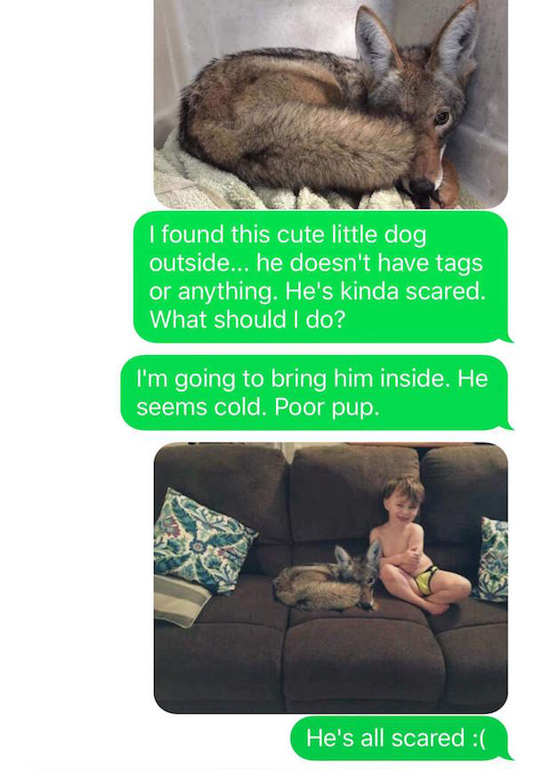 "01 anmfnvb Husband loses mind as wife trolls him with ""adopted"" coyote (12 Photos)"