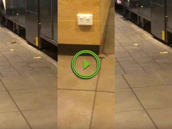 Mice run around in McDonald's trying to catch fries