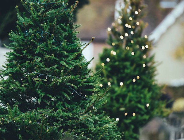 christmas tree 1149919 960 720 610x463 Holiday facts make for the best stocking stuffers (25 Photos)