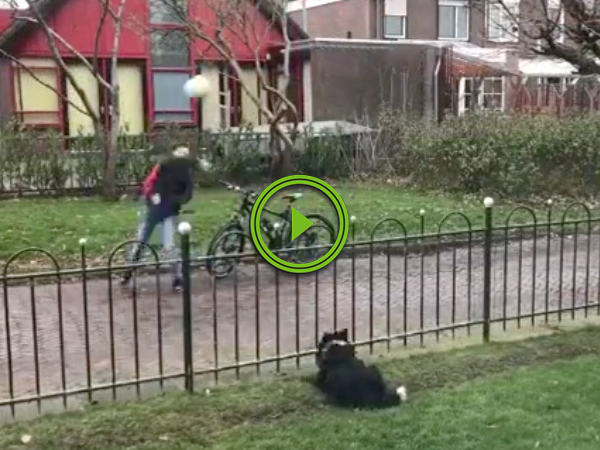 Dog tricks people into playing fetch