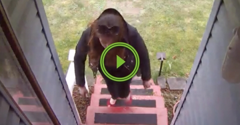 Guy uses blank 12 gauge shell to get sweet justice on box thief