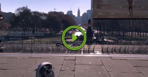 Adorable Bulldog Recreates Rock Scene (Video)