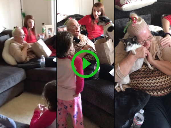 Grandma gets a surprise puppy for Christmas