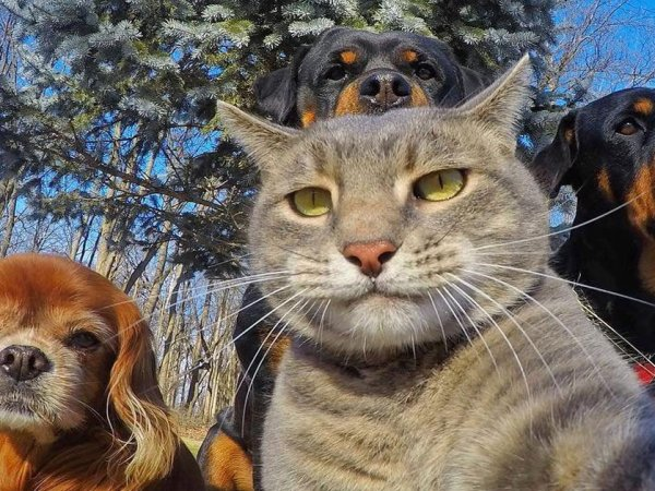 Animals taking awesome selfies (29 Photos)