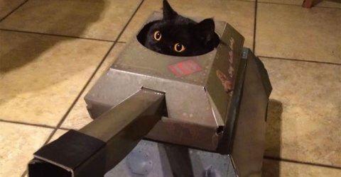 Company makes cardboard vehicles for cats (6 Photos)