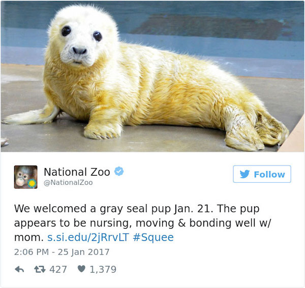 cute off zoos 211 #CuteAnimalTweetOff is here to save us all (27 Photos)