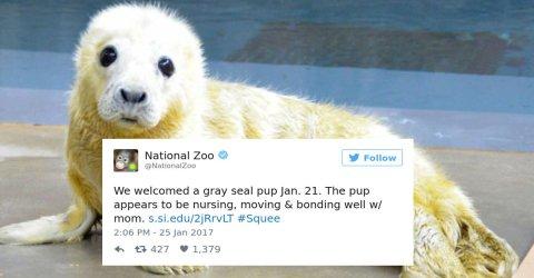 Zoos get into amazing #cuteanimaltweetoff (27 Photos)