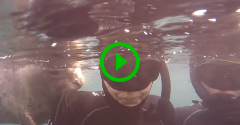 Cute seal pup plays with divers