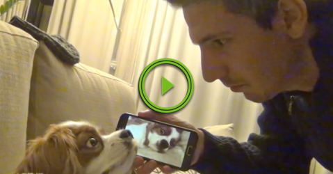 Dude records his dog snoring, and uses it to wake his dog (Video)