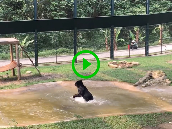 Rescued bear experiences pure joy - for perhaps the first time
