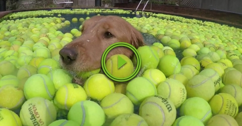 Guy does something amazing after his dog dies (Video)
