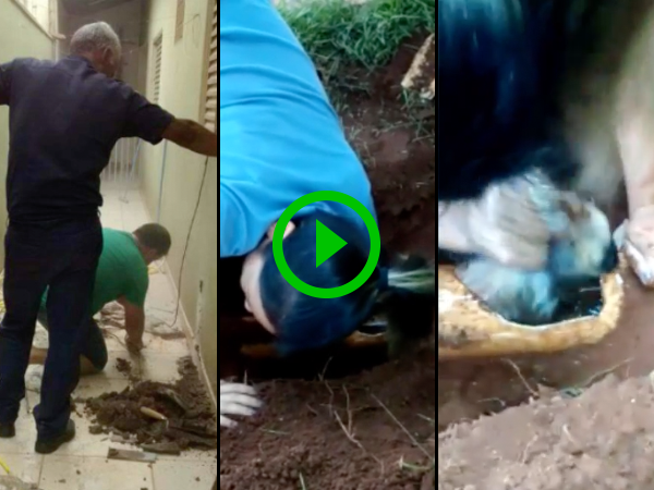 Adorable puppy rescued from water pipes (Video)