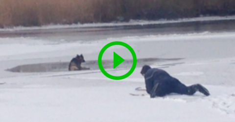 Man rescues dog from frozen lake (Video)