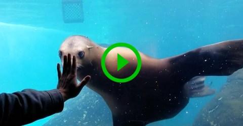 Sea Lion has serious hand fetish