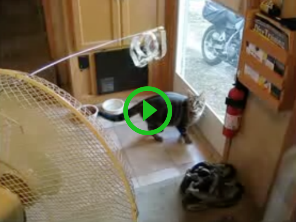 Man tries all the tricks in the book to save his screen door from cat