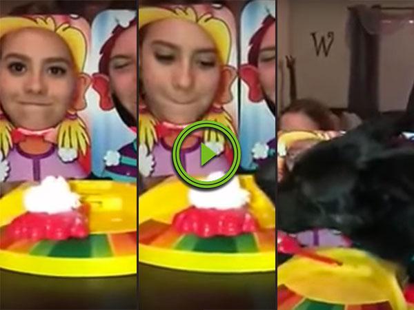 Dog steals cream in pie face game (Video)