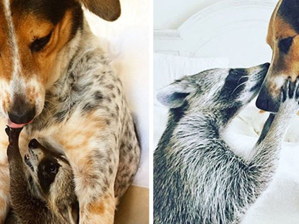 Comparison of animals growing up together are adorable (28 Photos)
