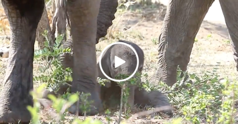 """Adorable elephant learning to """"walk"""""""