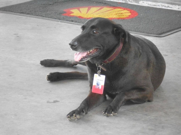 dog abandoned at a gas station becomes full time employee 5 photos 22 Dog abandoned at a gas station becomes full time employee (5 Photos)