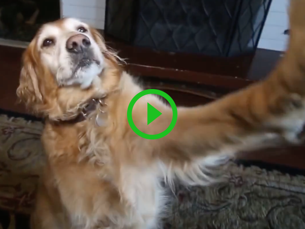 Dog does Lindsey Lohan and Paris Hilton impersonation (Video)