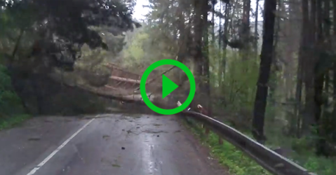 Half of forest crashes into bus (Video)