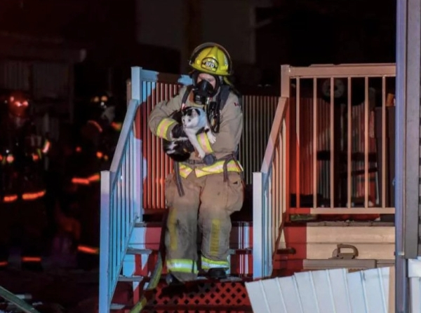 heroic cat bites sleeping owner to save the family from a house fire 3 photos 22 Heroic cat bites sleeping owner to save the family from a house fire (4 photos)