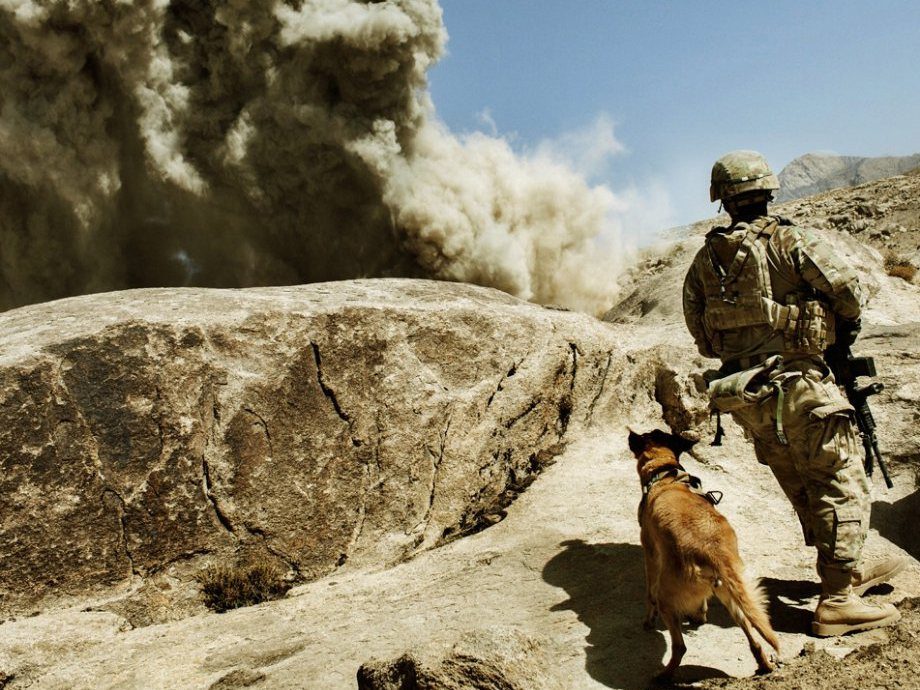 today we step up for the unsung heroes in america 14 photos 2 Today, we step up for the unsung heroes, our nations War Dogs (15 Photos)