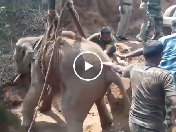 Baby elephant is rescued from a 70ft well