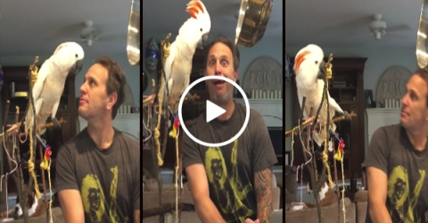 Loud bird fights with his owner
