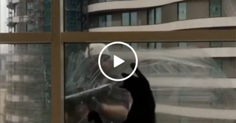 Cat finds the ultimate playmate with window washers (Video)