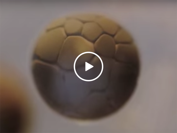 Incredible time lapse of cell division (Video)