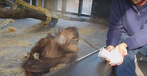 Monkeys doing things is the best thing (17 GIFs)